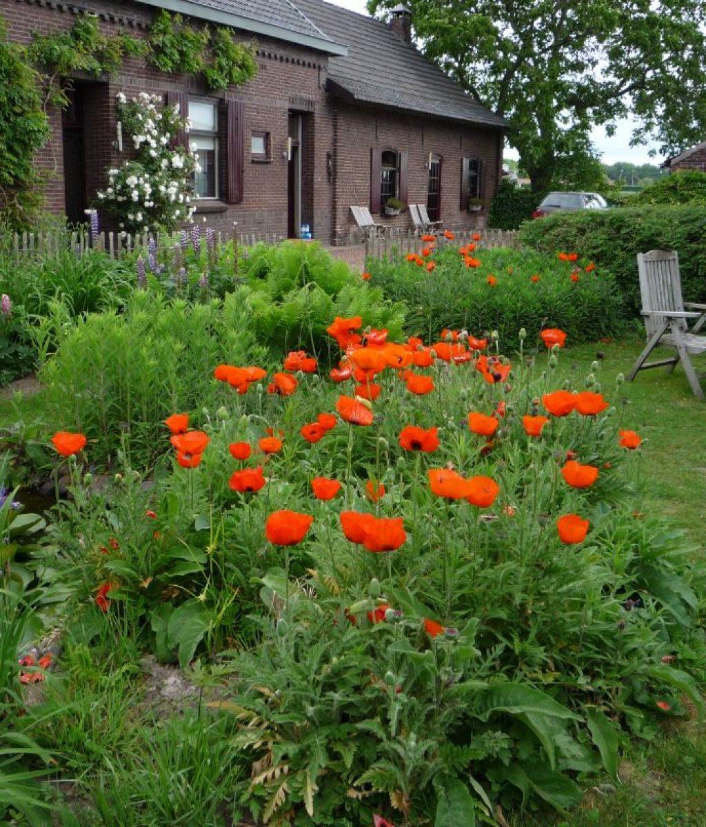 Tuin van Ku-Bez atelier - yoga studio - in Haler met oranje papavers op voorgrond